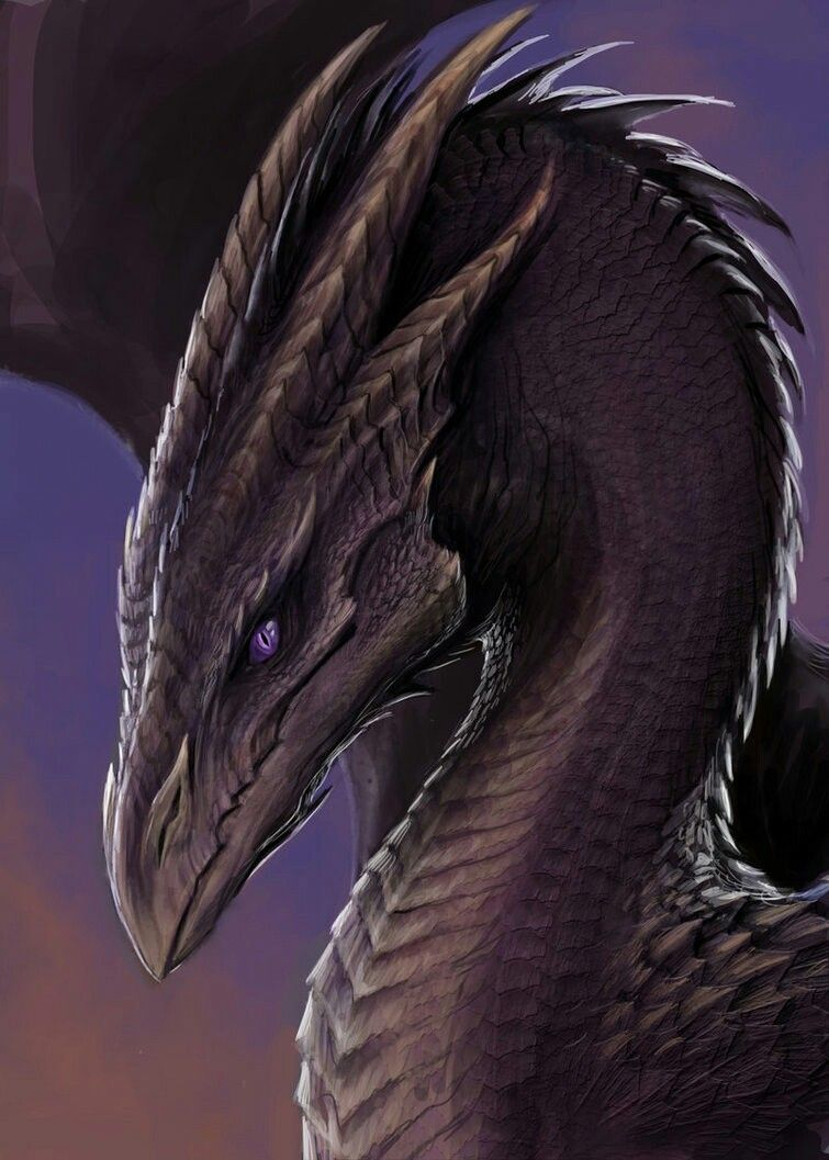 beautiful dragon i actually used this for my profile picture on beautiful dragon i actually used this for my profile picture on quotev for a while it is also the perfect picture for a character or cover
