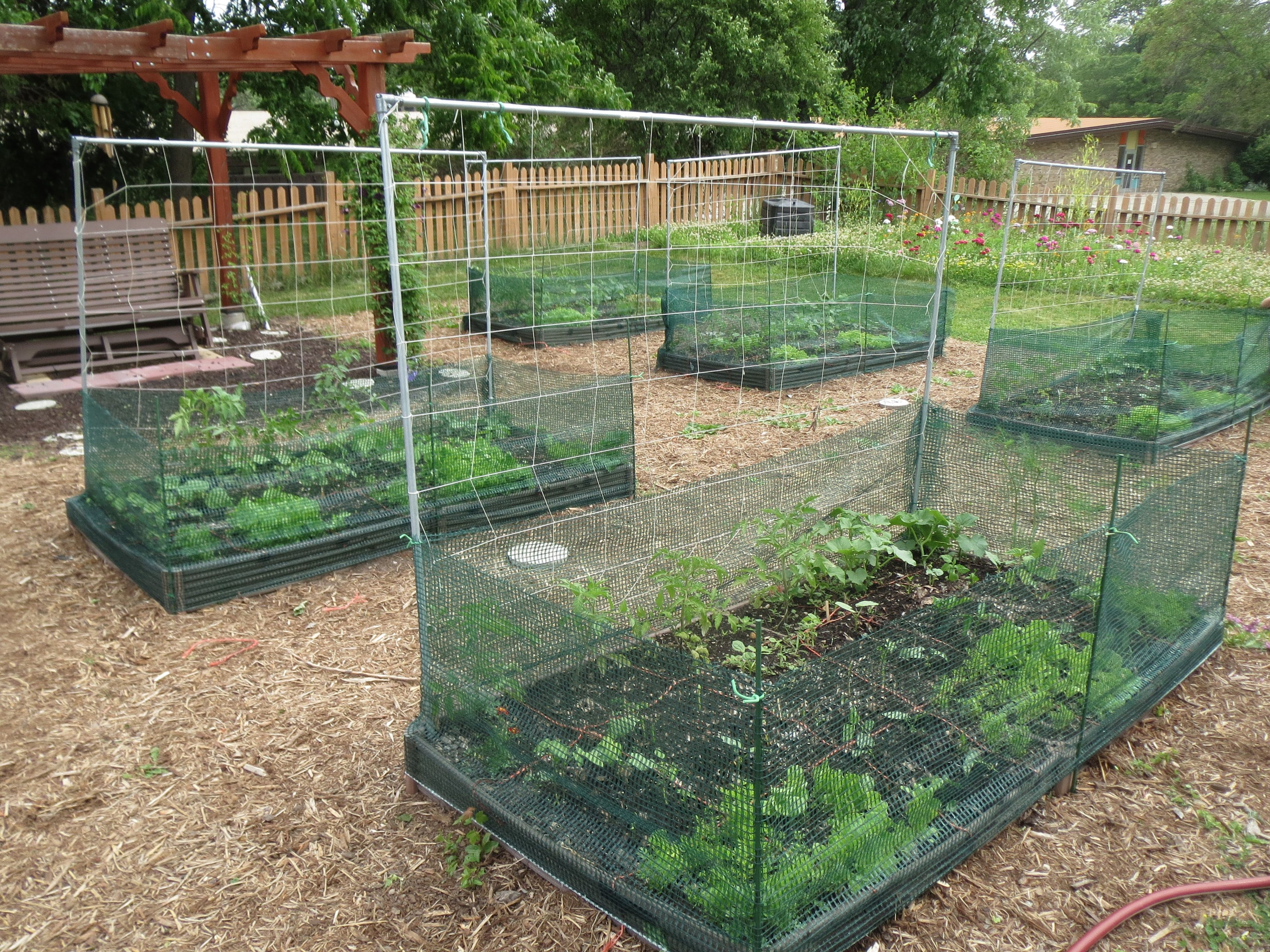 little the garden for pi netting bed bird and in blog