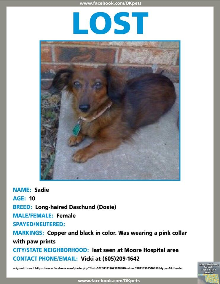 Moore Oklahoma Lost Please Share Losing A Pet Find Pets Dachshund Love