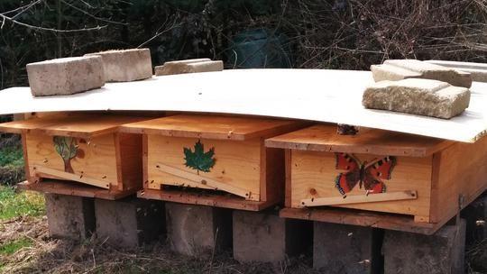 Ideal Die Bienen die Milben und Wir Gastbeitrag Varroakontrolle und behandlung im berblick