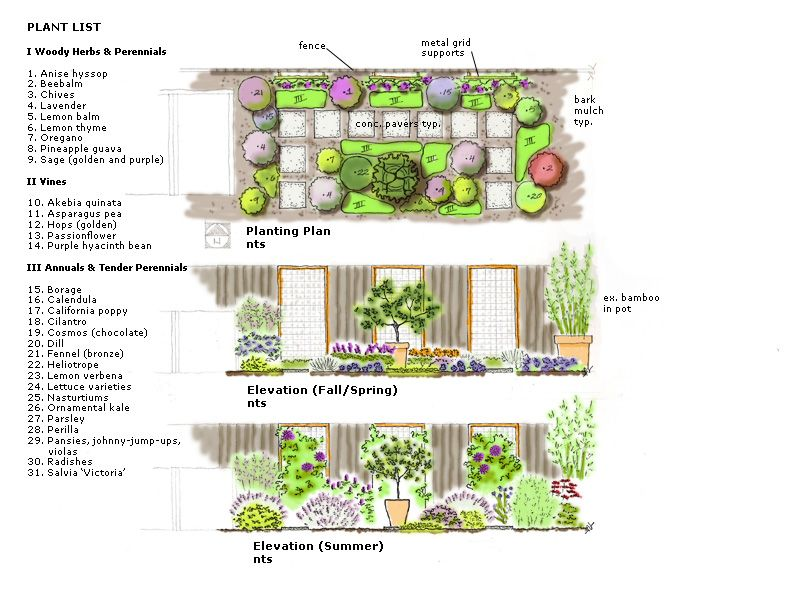 Rendered Planting Plan | Axonometric/Perspective Drawing Garden