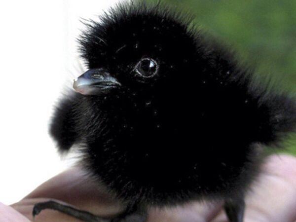 Baby yoga crow