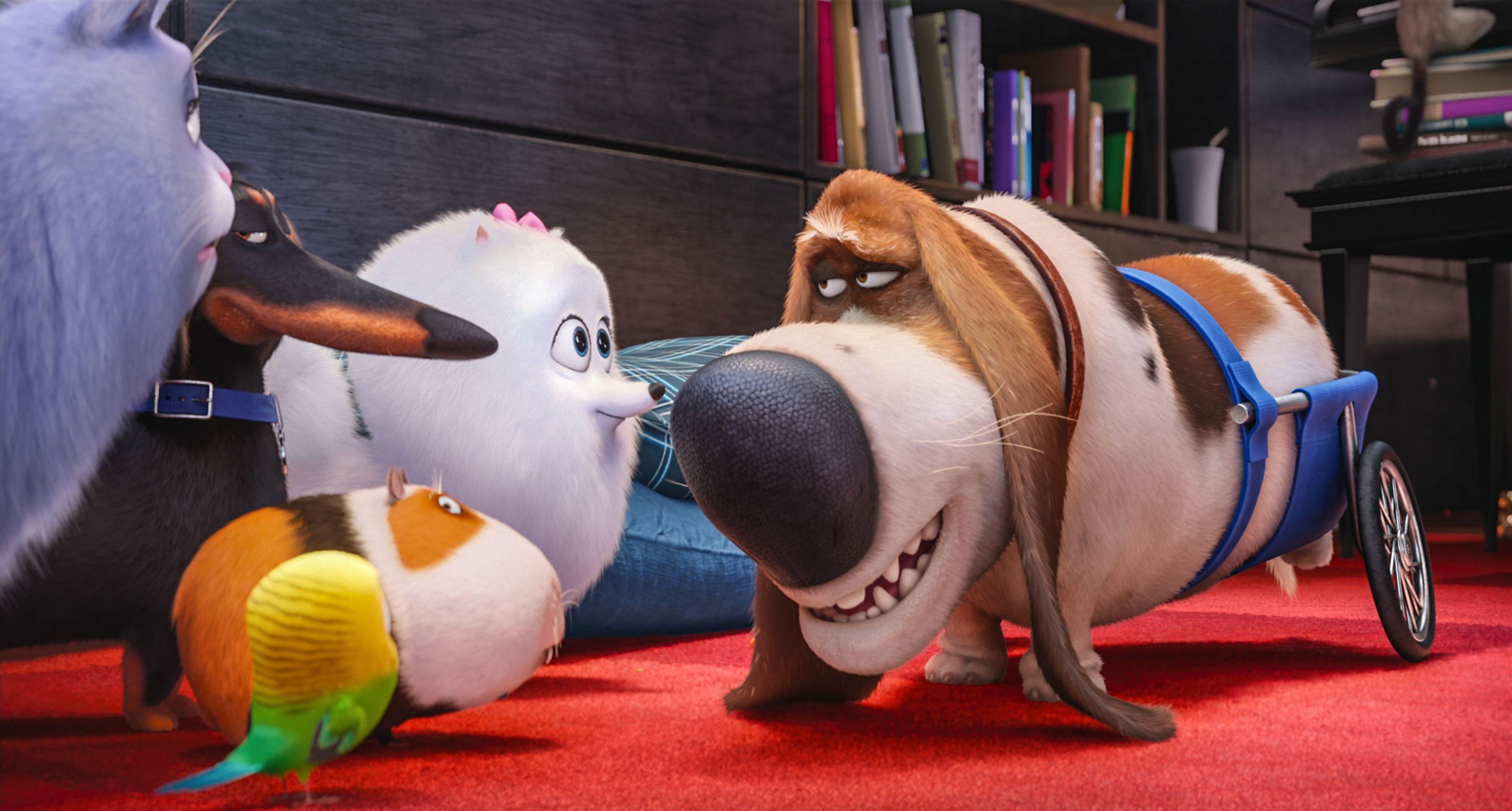 Pin By Empv On Secret Life Of Pets Secret Life Of Pets Pets Movie Pet News