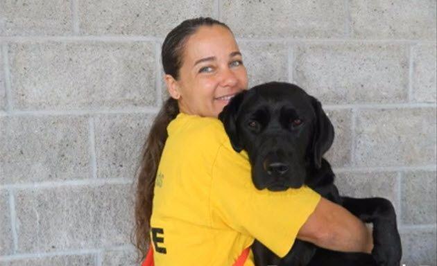 Diabetic Alert Labrador Service Dog Trained In Prison Amazing