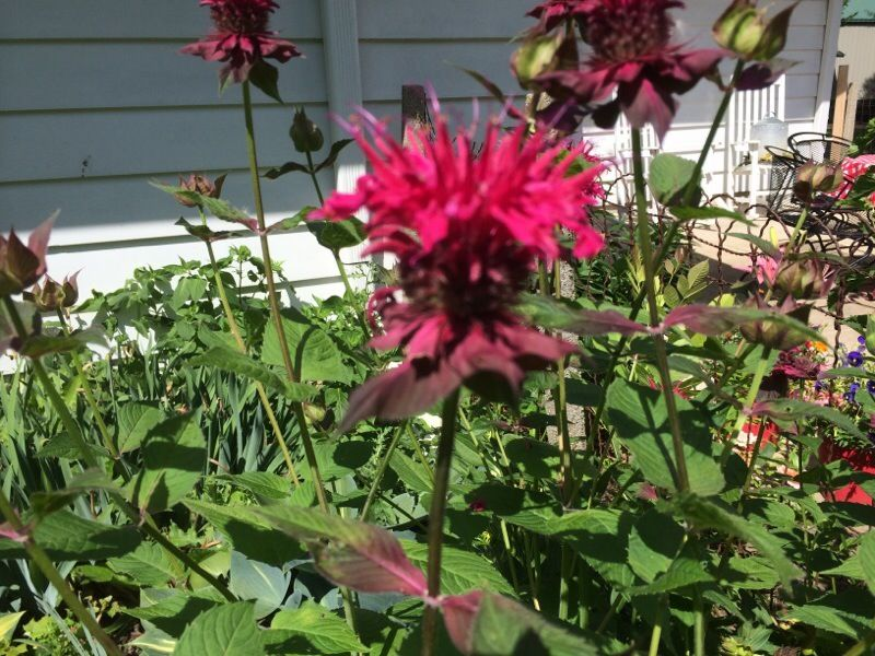 Free Plant Identification Plants, How to attract
