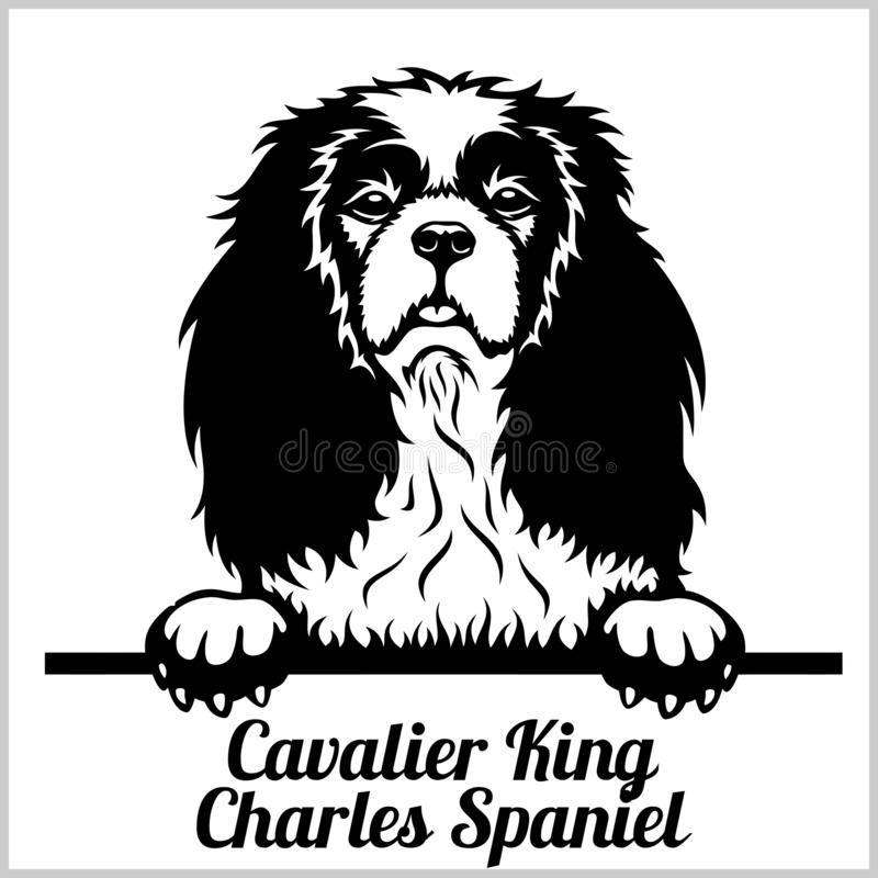 Cavalier King Charles Spaniel - Peeking Dogs - Bre