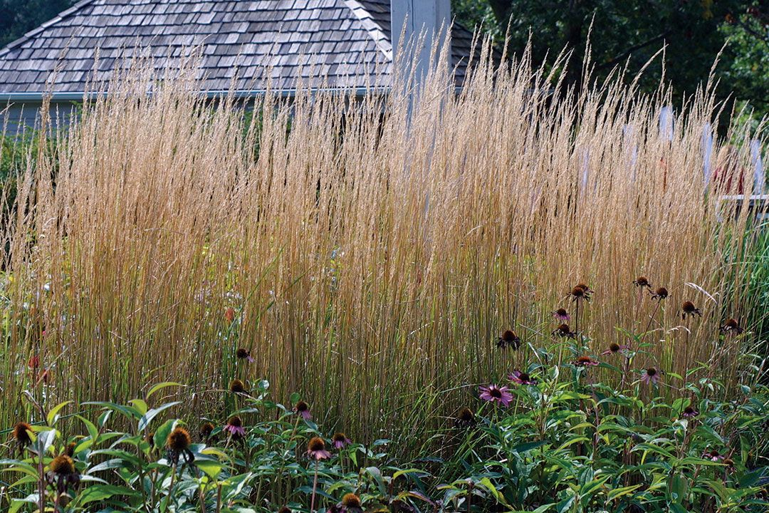 Designing With Grasses Finegardening Ornamental Grass Landscape Grasses Landscaping Grasses Garden