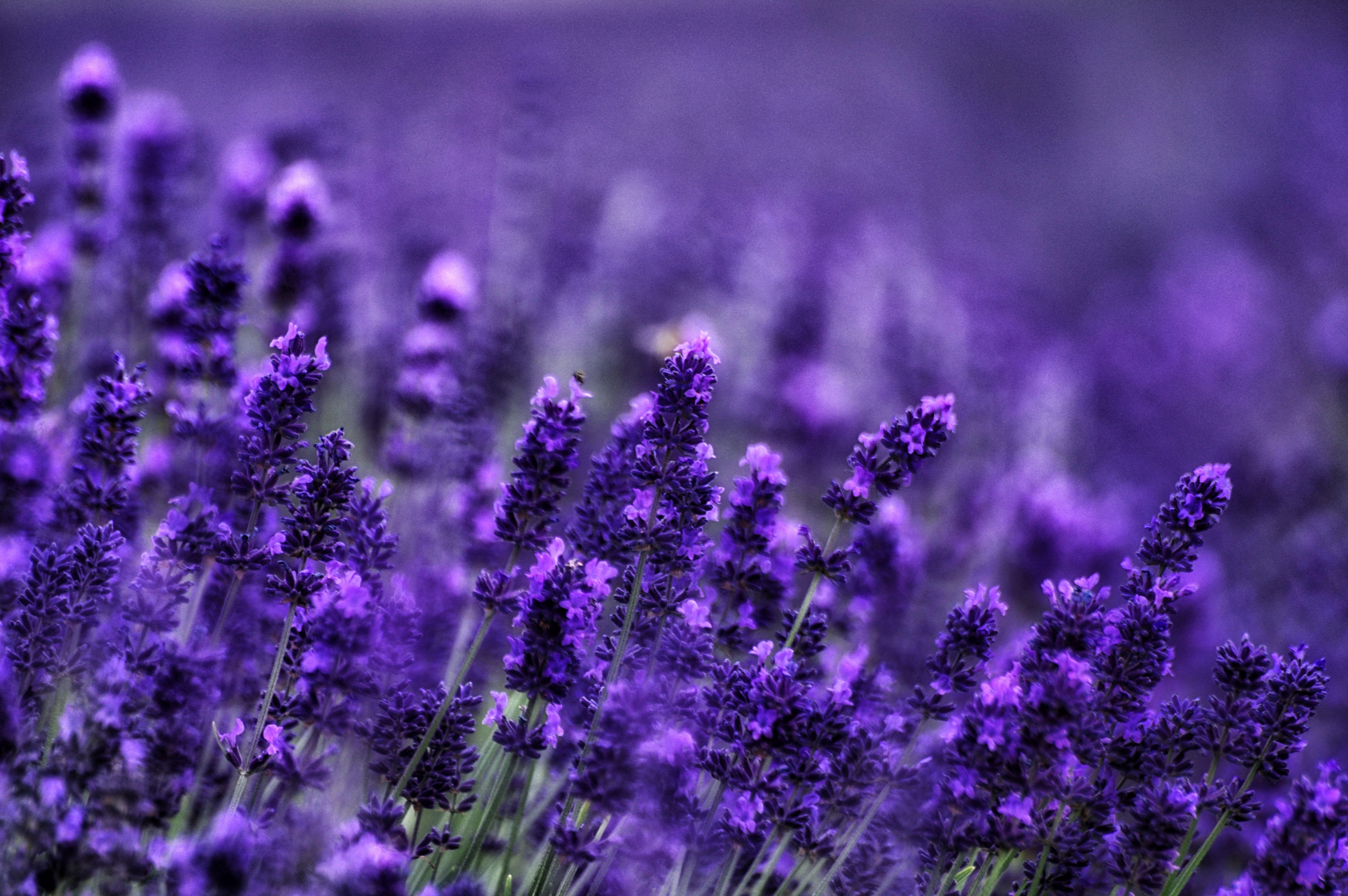 причины, картинки высокого разрешения фиолетовые каждая