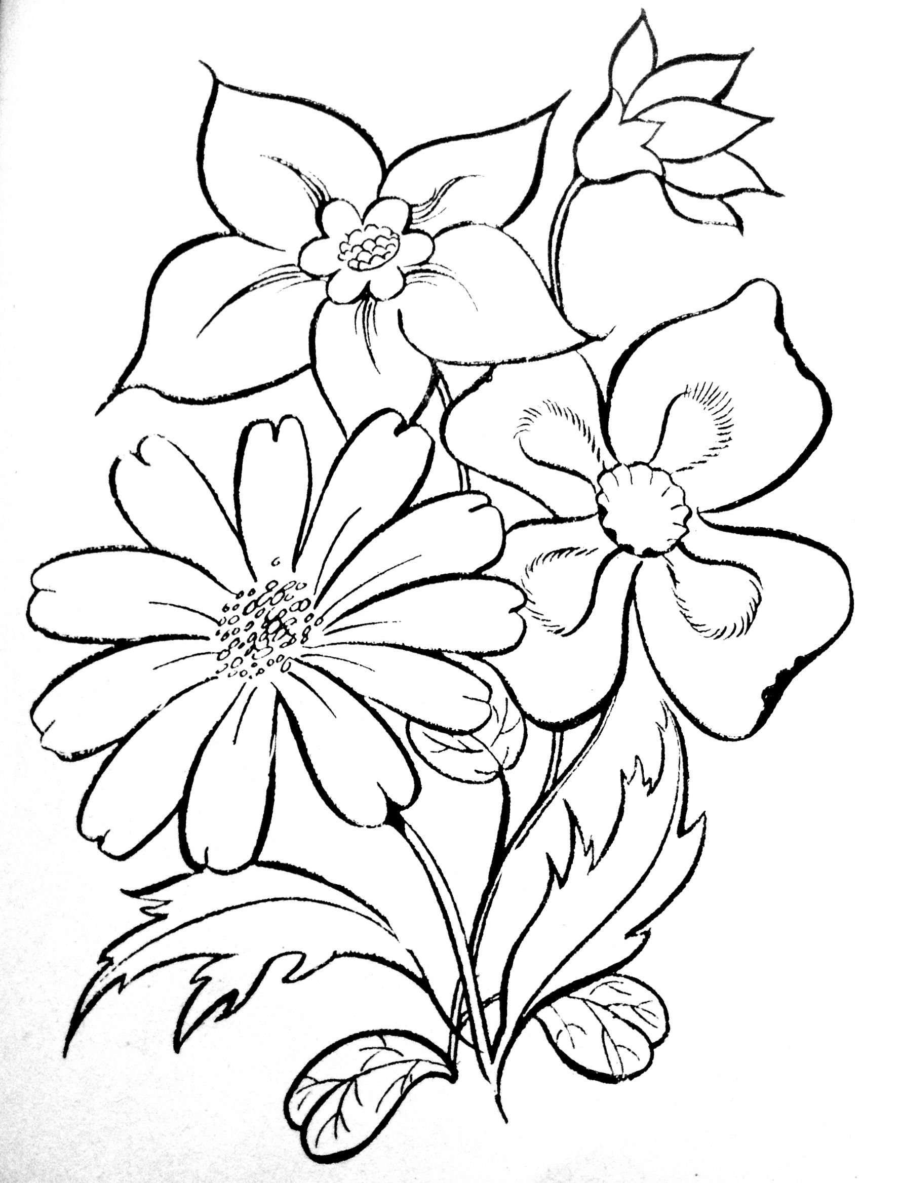 Pin by Jillane Manville on Coloring pages & Basic patterns templates