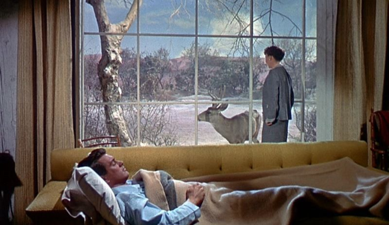 Want to see: 'All That Heaven Allows.' I feel a Todd Solondz bender coming on; I think I'll warm up with some old time Douglas Sirk.