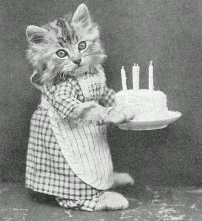 Cat Holding Cake Birthday KittyHappy