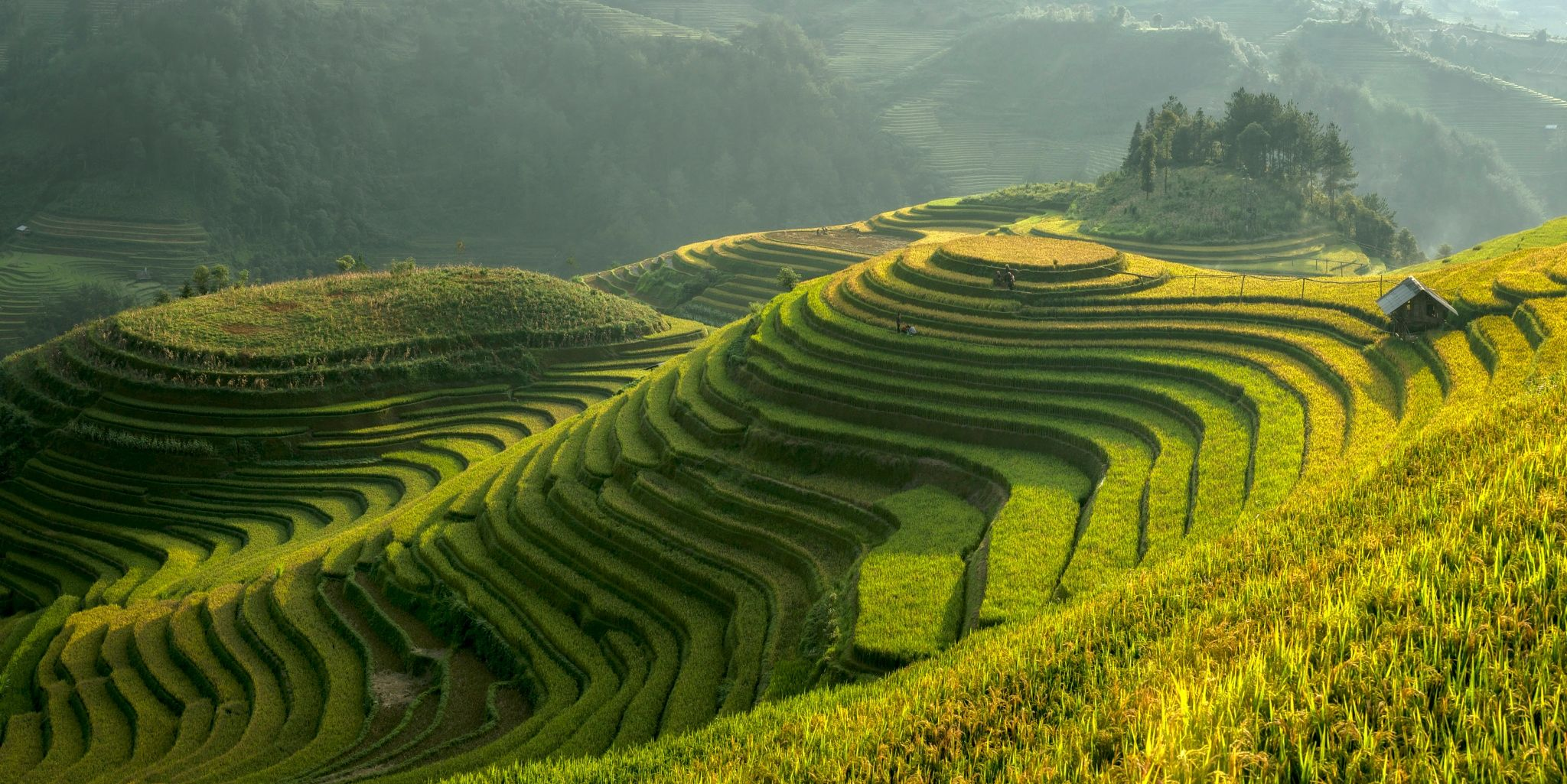 Image result for mu cang chai