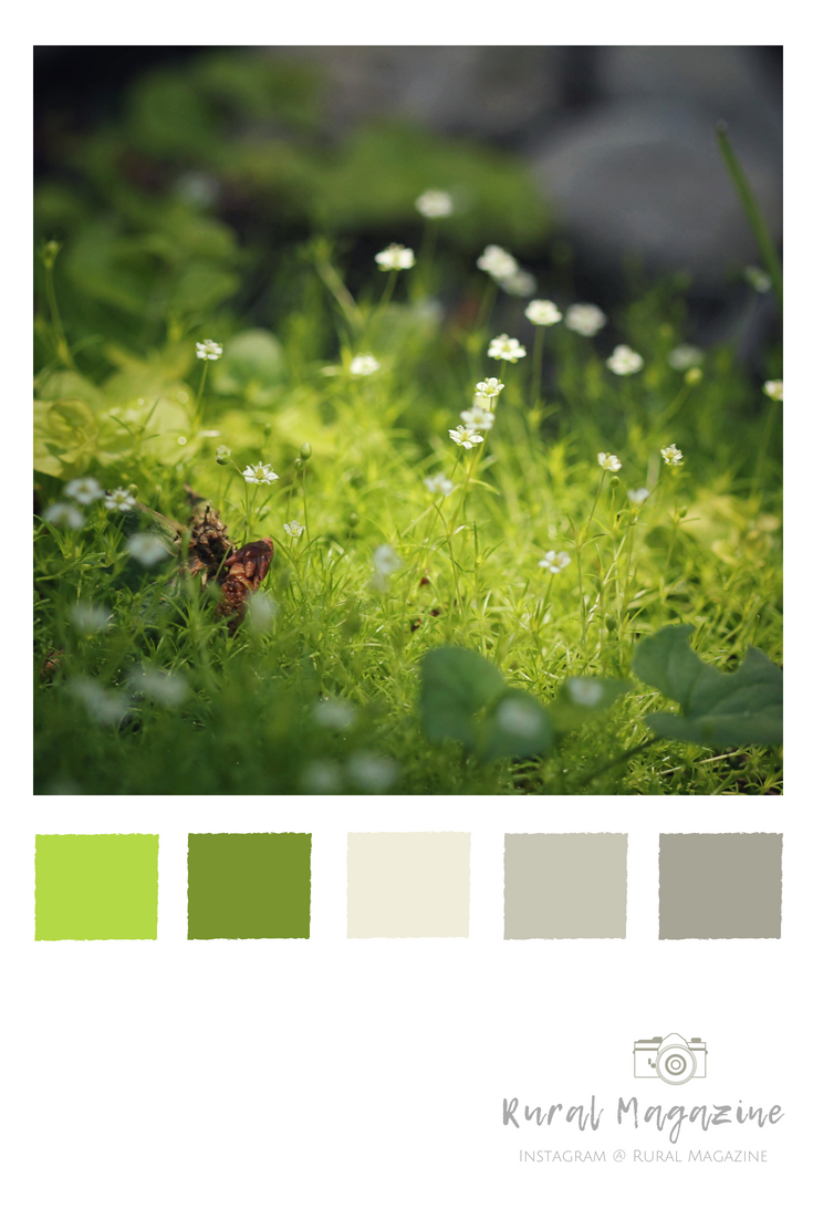 Farbkarte Wandfarbe Fairy Moss With Sunlight And Green Toned Color Palette Visit