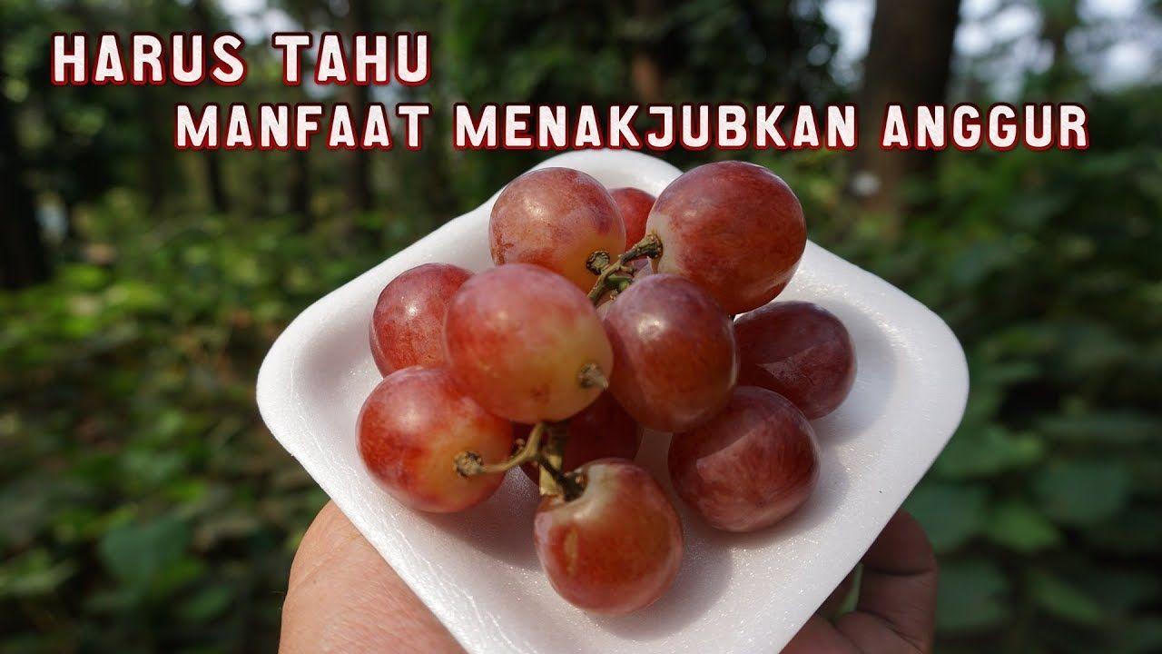 Manfaat Buah Anggur Dan Kandungannya