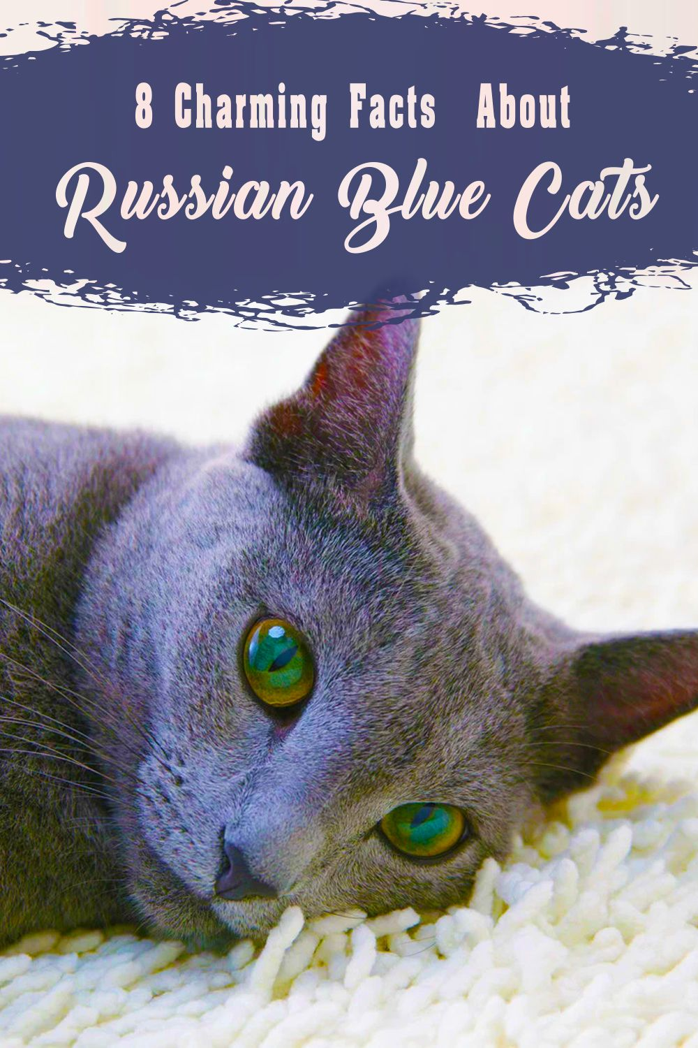 Pin on Russian Blue Cat Lovers and Owners