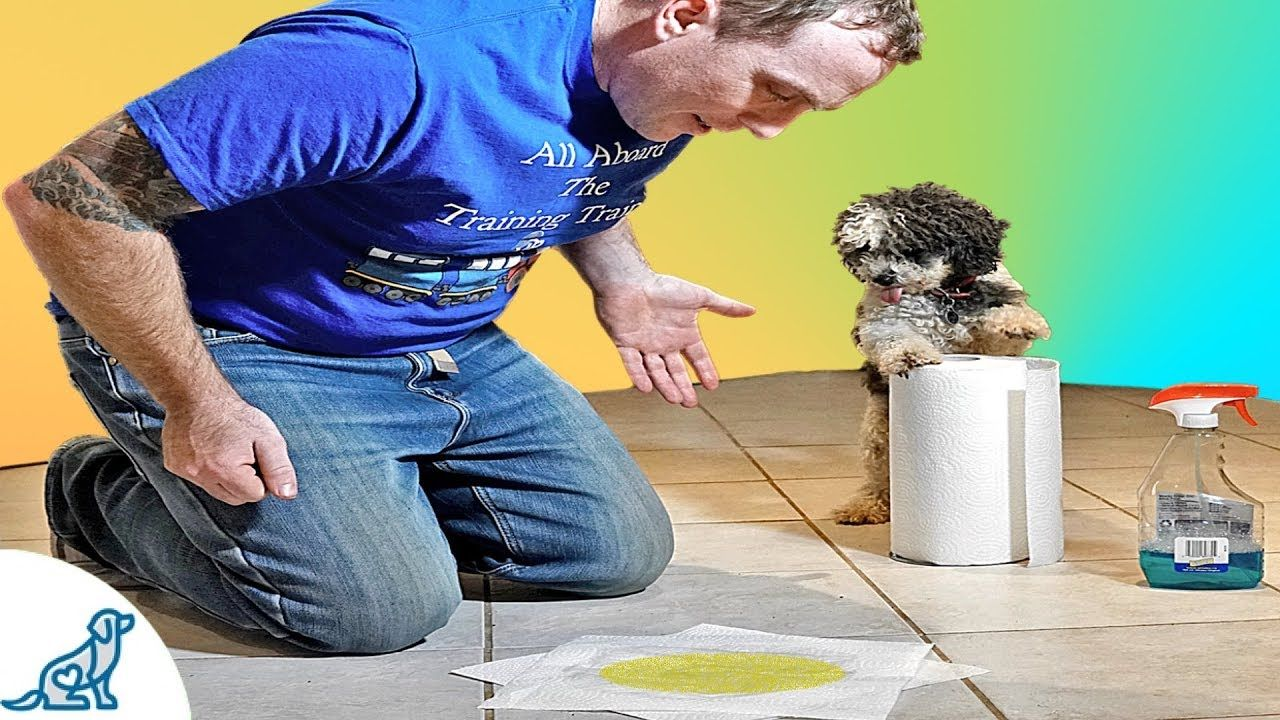 Puppy Potty Training How To Stop Your Puppy From Peeing
