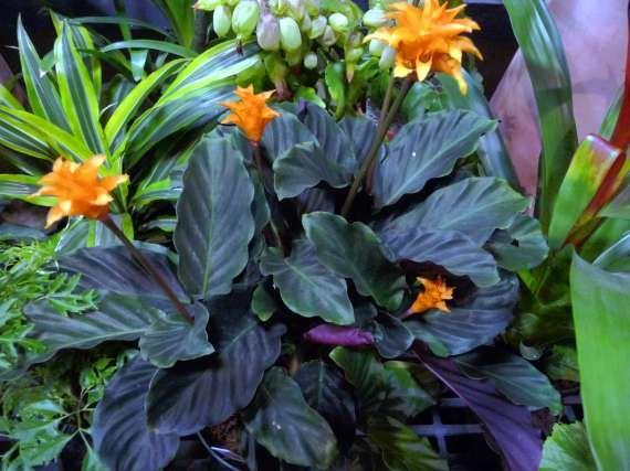 plantas de jardin y sus nombres buscar con google