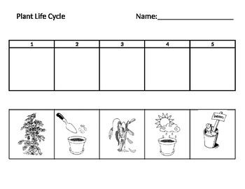 plant life cycle cycles in nature pinterest sequencing worksheets cycling and worksheets. Black Bedroom Furniture Sets. Home Design Ideas