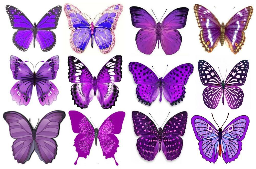 purple butterfly cake toppers