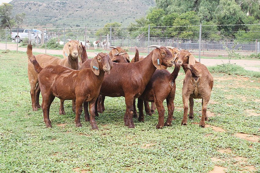 Goats For Sale Near Me Craigslist With tools for job search, resumes, company reviews and more, we're with you every step of the way. cragslist and job search