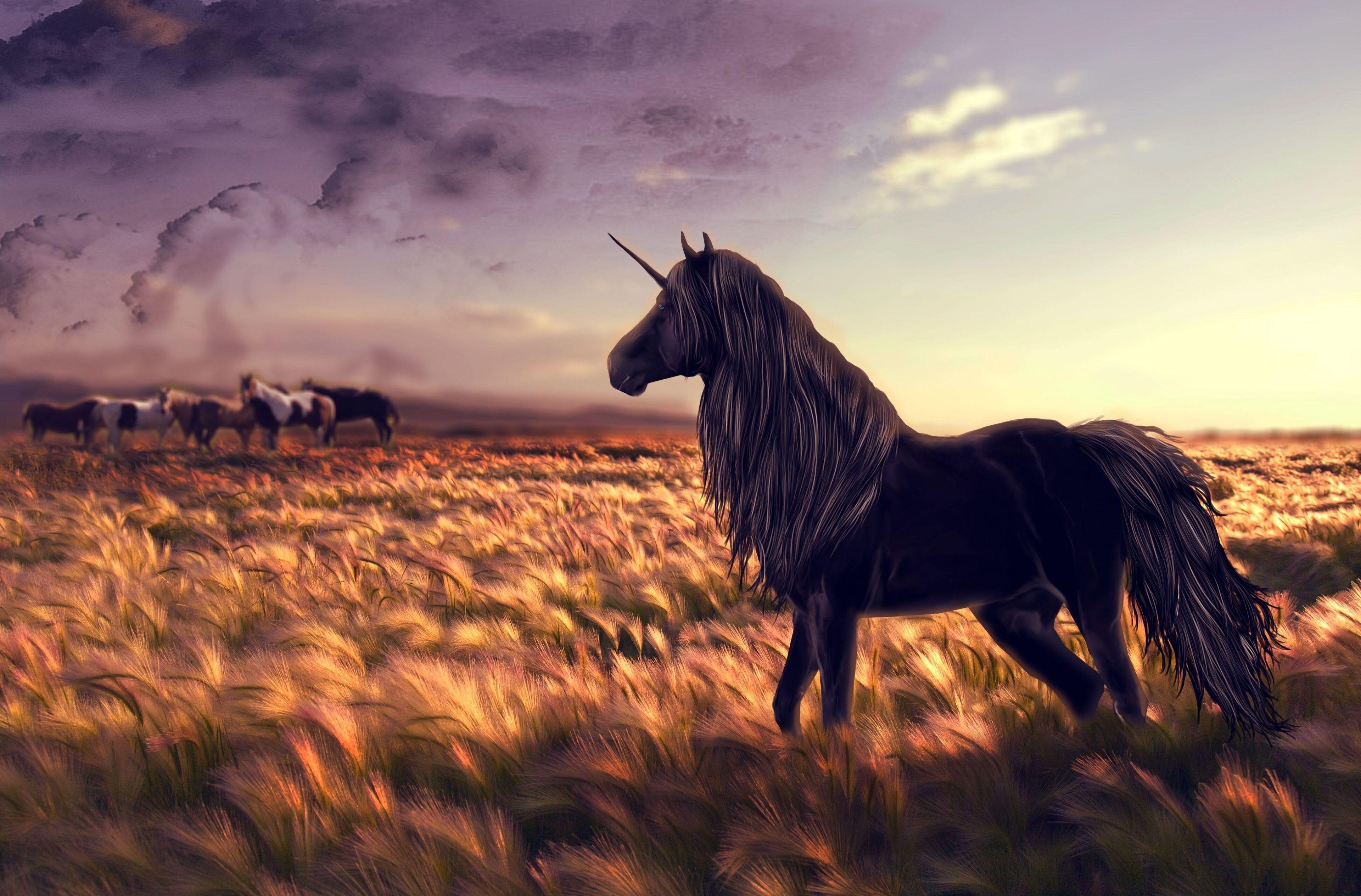 3840x2530 Unicorn 4k Windows Hd Wallpaper Free Download Unicorn Wallpaper Unicorn Backgrounds Unicorn Fantasy