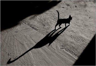 A Cat's Sixth Sense