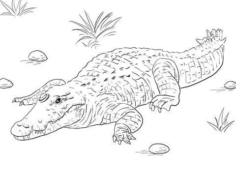 Ausmalbild Afrikanisches Nilkrokodil Ausmalbilder Kostenlos Zum Ausdrucken Ausmalen Krokodil Malvorlagen Tiere