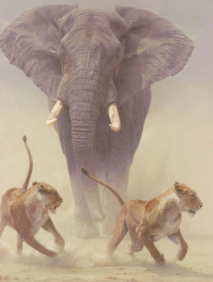 #Elefant jagt zwei Raubkatzen.