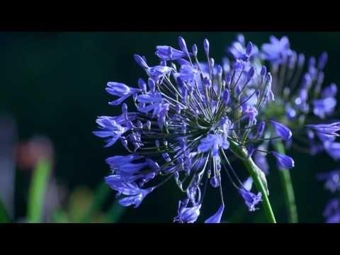 Deep Meditation Music -  yoga kriya - YouTube