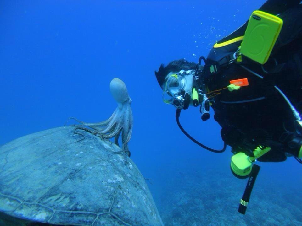 злые аквалангисты картинки смешные замечаем темно-красные, желтые
