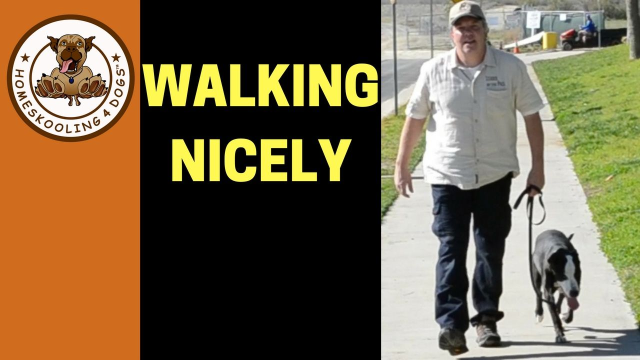 Teaching Shelter Dog To Walk On Leash Without Pulling Youtube
