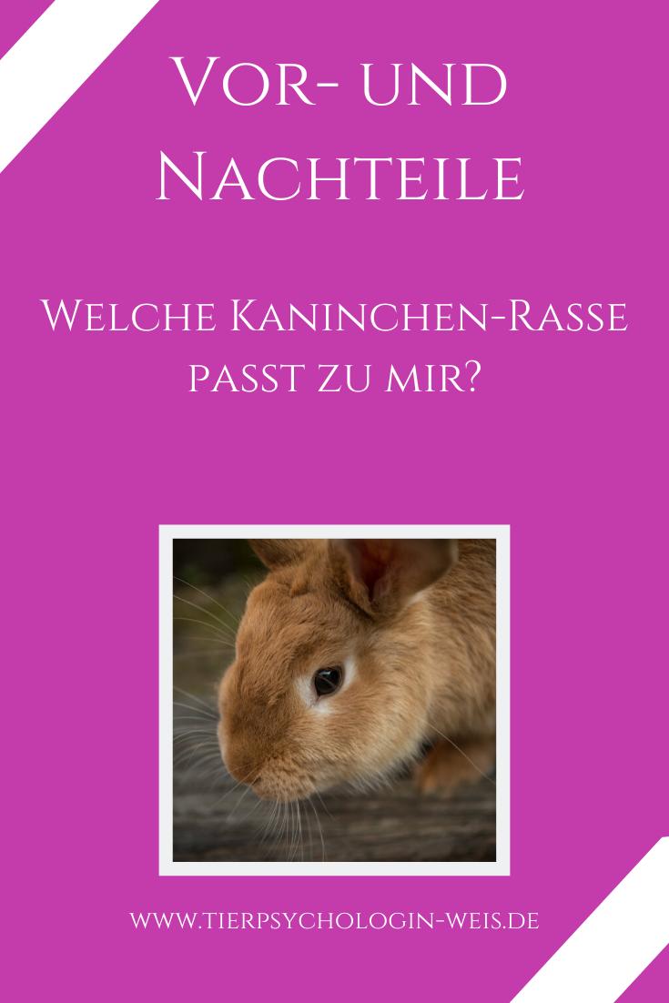 Welche Kaninchenrasse Passt Zu Mir In 2020 Kaninchenrassen Kaninchen Kaninchengehege