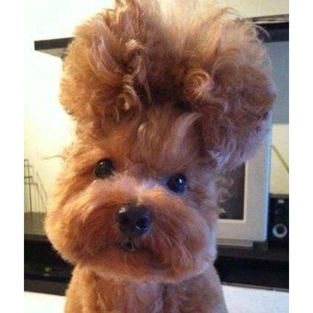 Saturday night hair do ready!