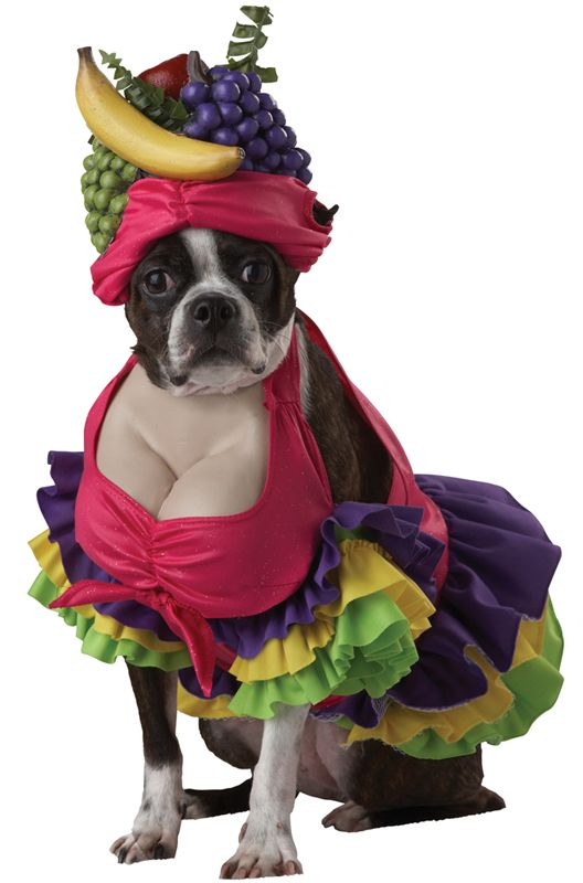 Dog In Carmen Miranda Costume Dog Halloween Halloween Animals