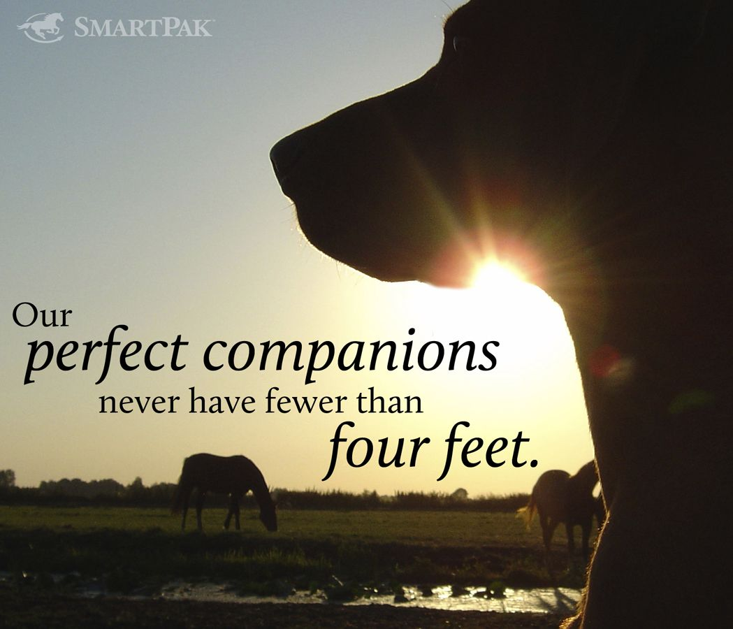 Pin By Sherry On The Truth Funny Animal Quotes Animal Quotes Dog Quotes