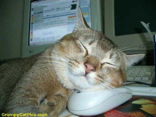 Cat And Mouse Share A Nap On The Office Funny Cute Cat Picture ◬