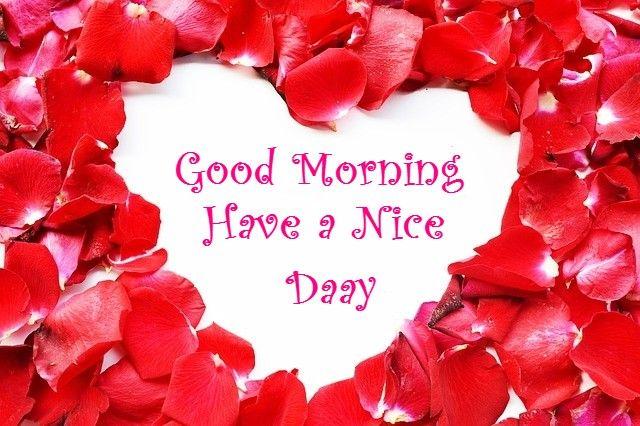 beautiful good morning flower images | Sibongile | Pinterest ...