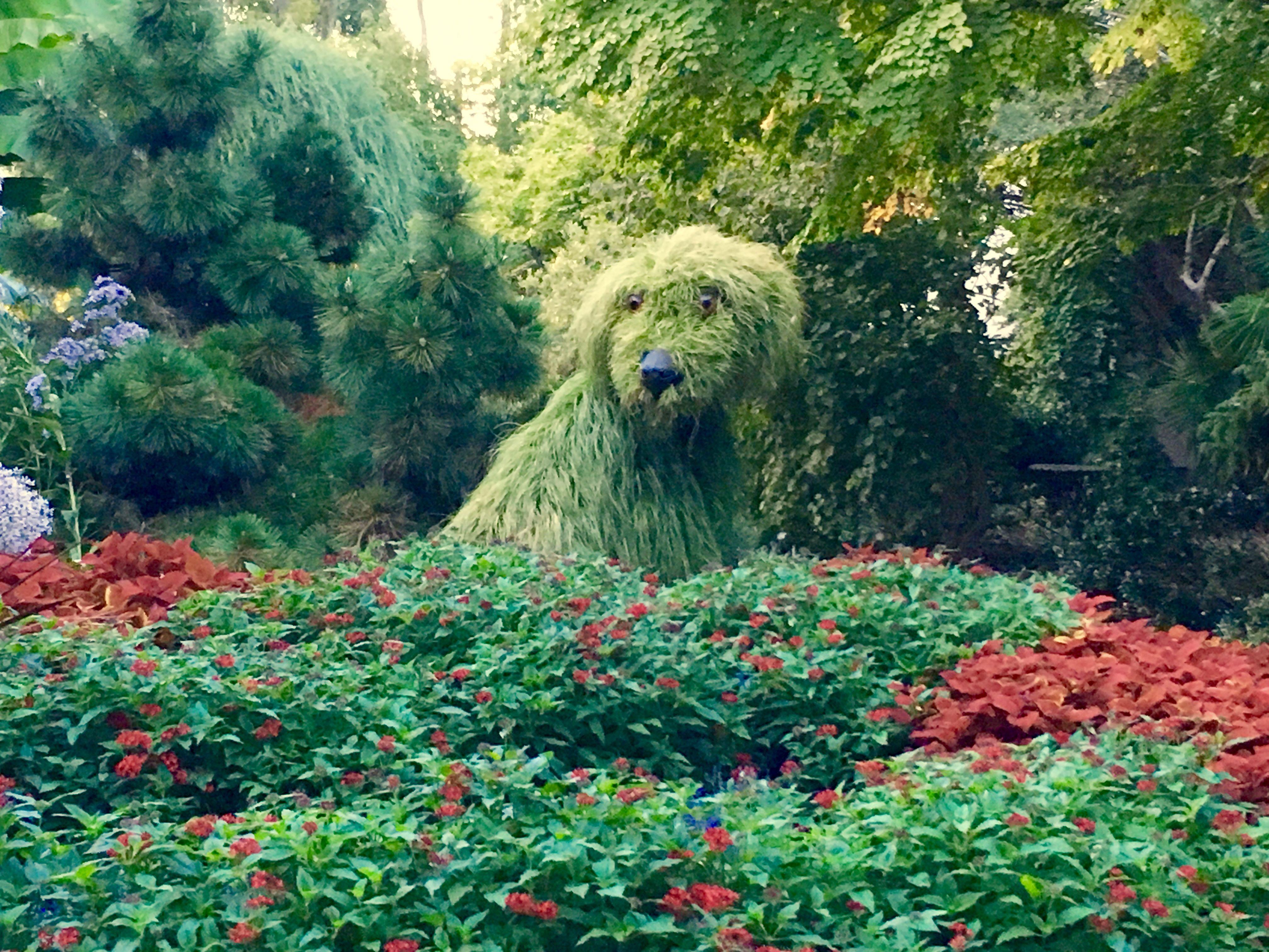Shaggy Dog Atlanta Botanical Garden Atlanta Botanical Garden