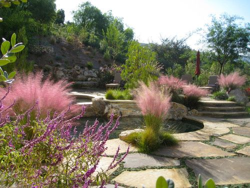 I D Love To Put A Ton Of This Pink Muhly Grass In My Back Yard It S Great For Xeriscaping Mediterranean Landscaping Pink Pampas Grass Low Water Gardening