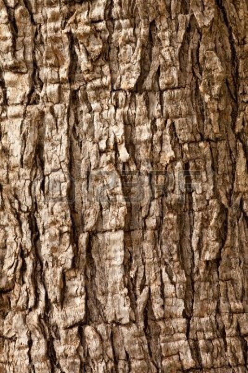 Olive tree (Olea europaea) bark background texture pattern | Bark of ...