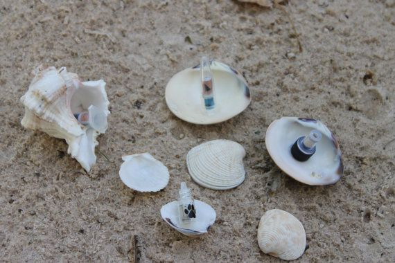 how to find shells at beach