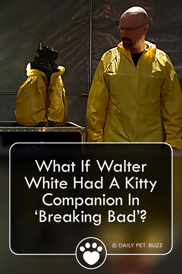 A funny parody video of Breaking Bad gives Walter White what he needed all along  an adorable feline companion Perhaps things would have gone better for Walter if he had...