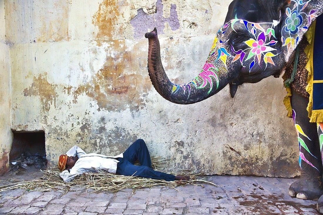 Elephant Painted photography