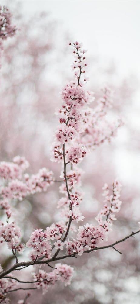 خلفيات ورد للايفون Beautiful Photos Of Nature Flowers Spring Blossom