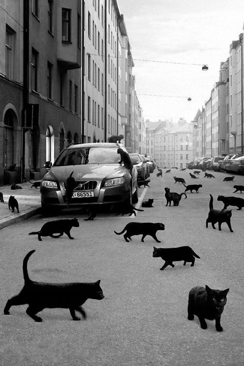 * *> This reminds me of 'The Stand' by Stephen King, where everyone was dying or died of a plague, except cats.