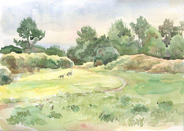 catalina: Campos Verdes
