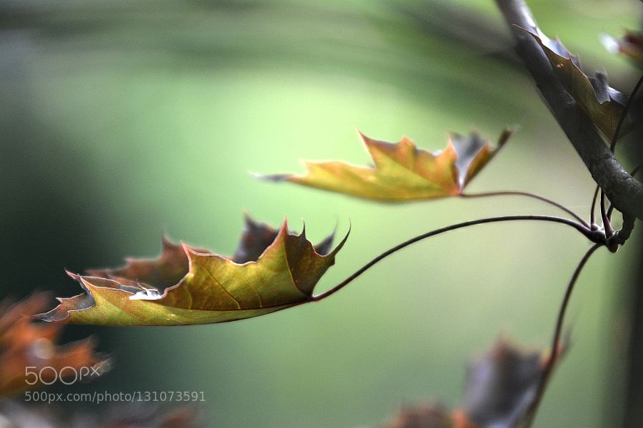 Autumn Impression ... - Pinned by Mak Khalaf Fine Art AutumnFine artForestLeafMacroNature by janusskop