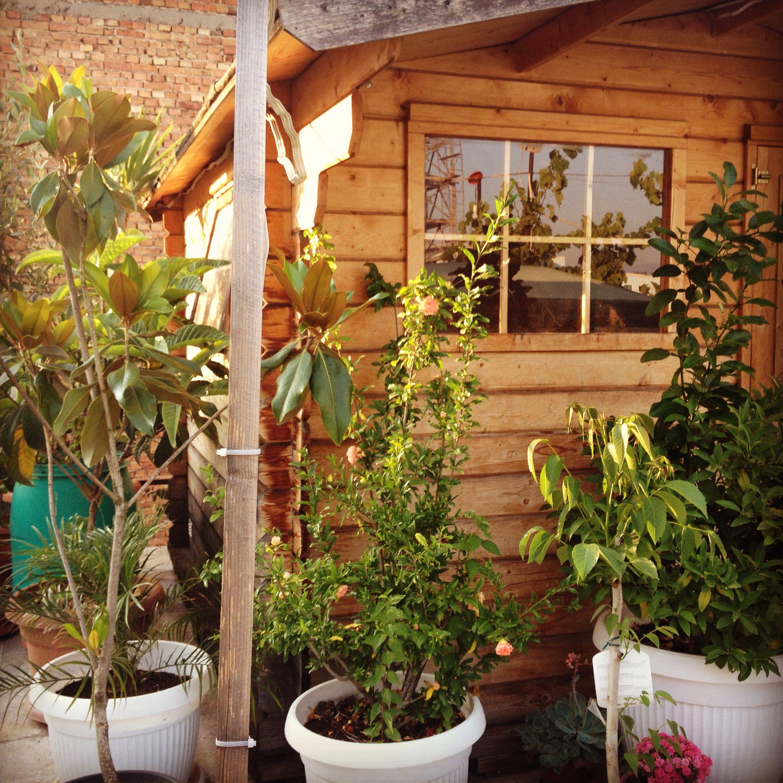My garden | Gardening- flowers- kids fun | Pinterest