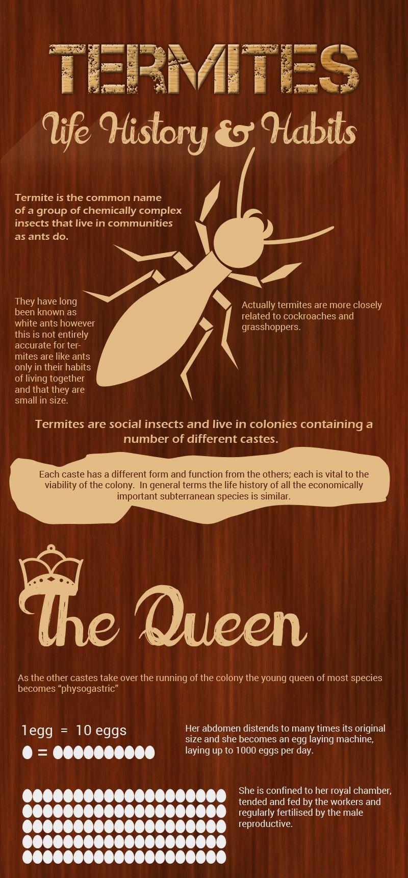 Pin By Bob Gunn Termite Solutions On Pest Control Brisbane Termite Problem Termite Control Termites