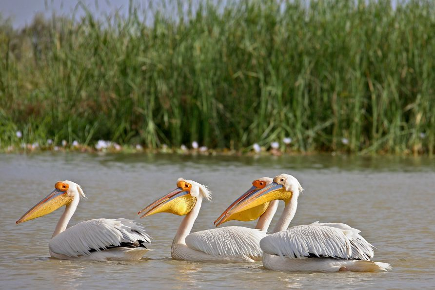Senegal: Djoudj National Bird Sanctuary